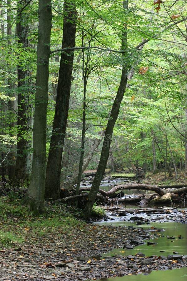 En el bosque fotos de archivo libres de regalías