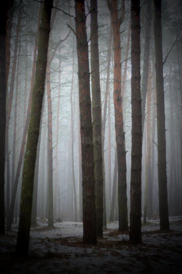 En el bosque brumoso imagenes de archivo