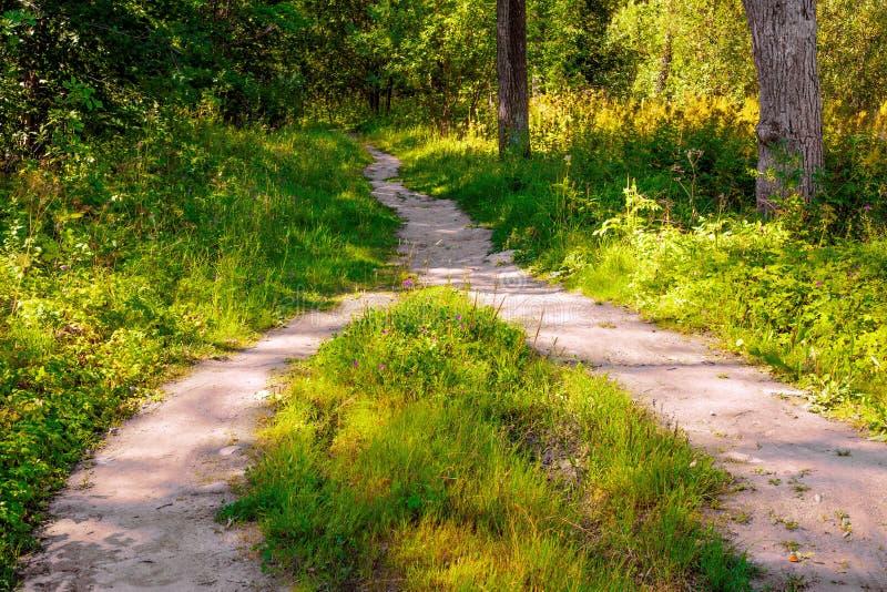 En el bosque, dos trayectorias peatonales se combinaron en una fotografía de archivo libre de regalías