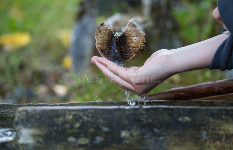 En el bosque la fuente del agua, agua de manatial fría, de la d fotos de archivo libres de regalías