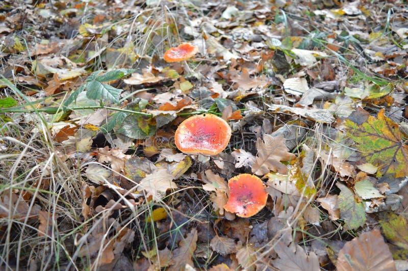 En el bosque, Noordoostpolder, Países Bajos imagen de archivo libre de regalías