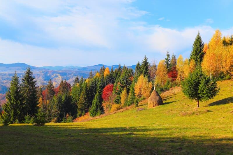 En el césped amarillo de la hierba hay árboles justos enormes verdes con el fondo de las montañas del otoño fotografía de archivo libre de regalías