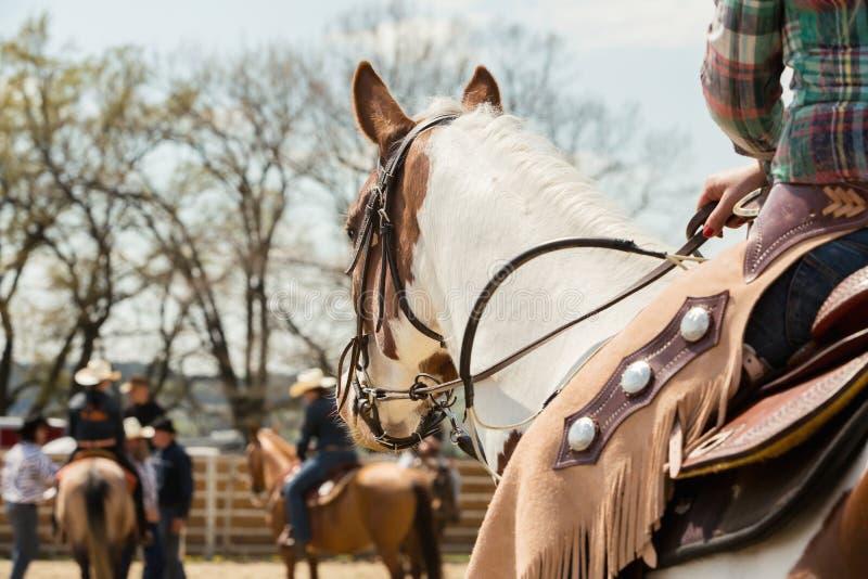En el caballo de silla de montar en la raza occidental, caballo hermoso de la pintura en un evento que compite con del barril en  fotografía de archivo