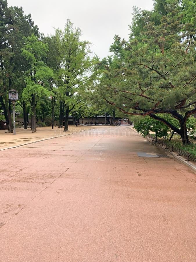 En el camino del árbol del verde del parque fotos de archivo