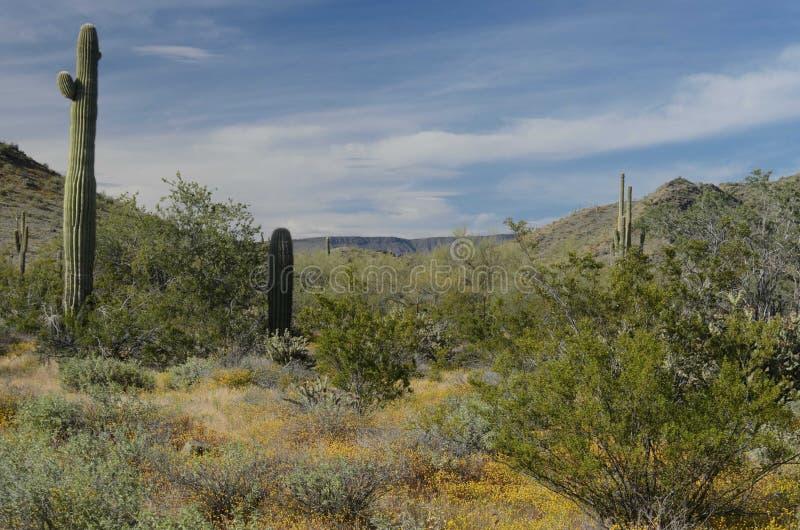En el desierto fotografía de archivo libre de regalías