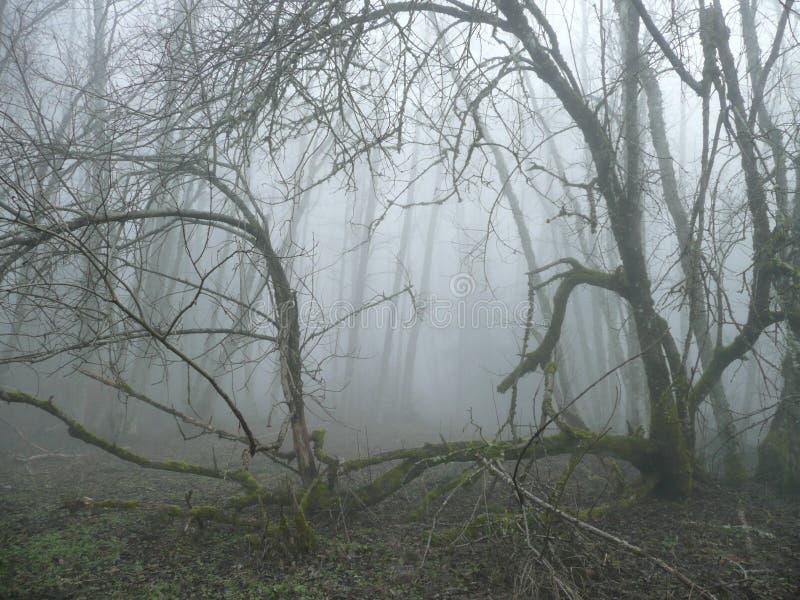 en el don& x27 del bosque de la persona chapada a la antigua; cicatriz imagenes de archivo