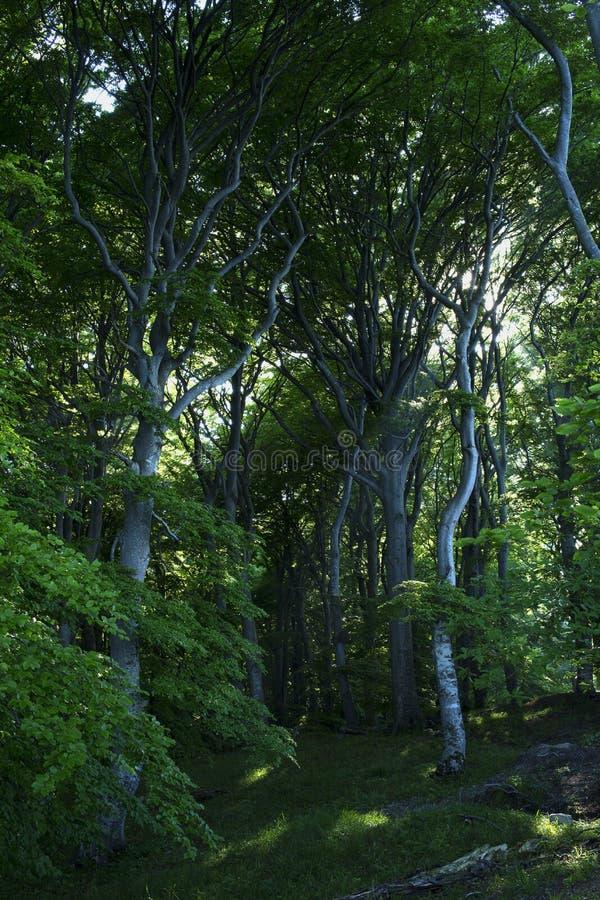 Download En el Forrest IV imagen de archivo. Imagen de árboles - 42430677