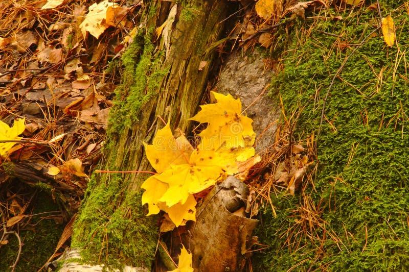 en el parque en otoño fotos de archivo libres de regalías
