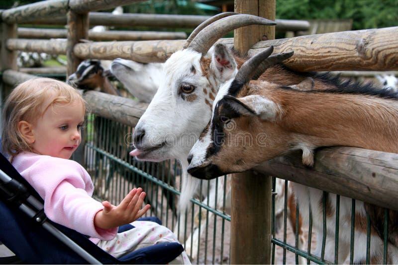 En el parque zoológico imagenes de archivo