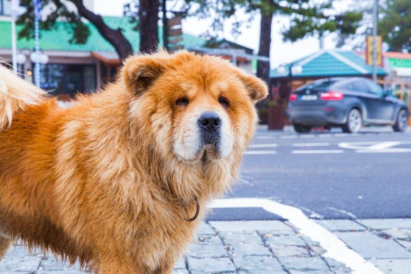 En el perro y los edificios del perro chino de perro chino de la calle Foto el 2018 del viaje de diciembre imágenes de archivo libres de regalías