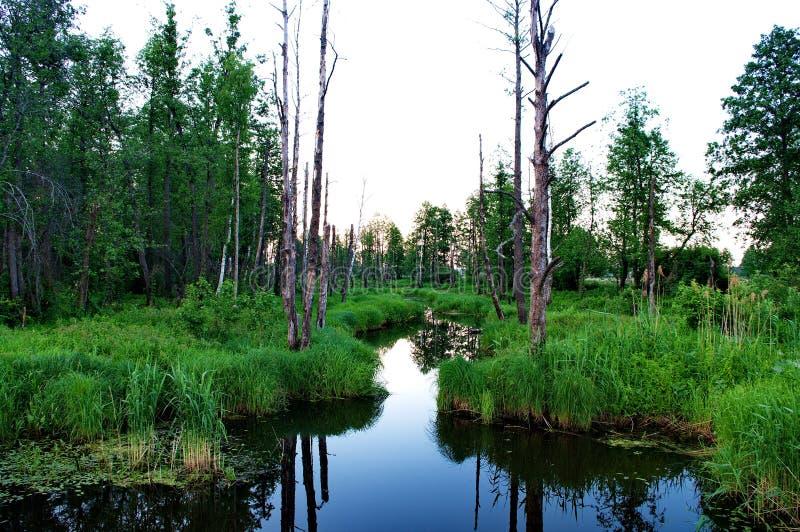 En el terreno de aluvión del río de Klyazma fotos de archivo