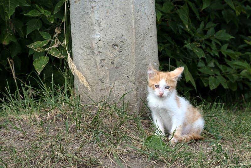 En el verano, en la calle cerca del gatito ciego sin hogar del pilar concreto rojo foto de archivo