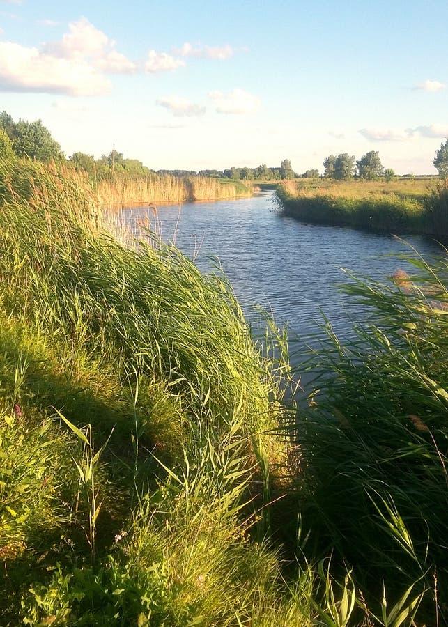 En el verano en el río foto de archivo