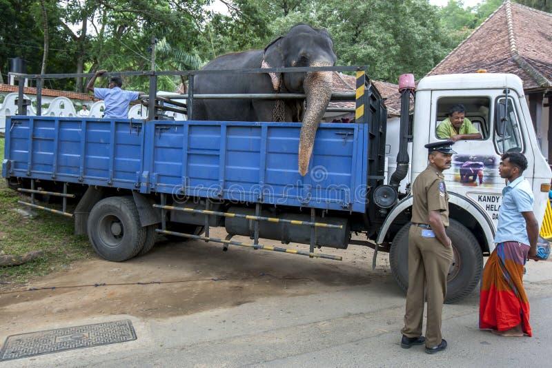 En elefantridning i baksidan av en lastbil arkivbild
