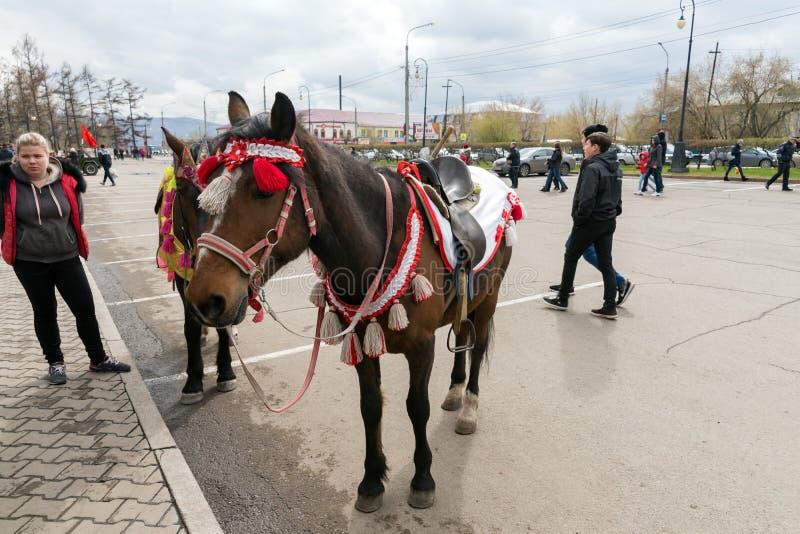 En elegant häst står i stadfyrkanten som väntar på de, som önskar att rida den, under berömmen av Victory Day WWII arkivfoton