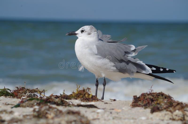 En enkel fågel: en seagull royaltyfria foton