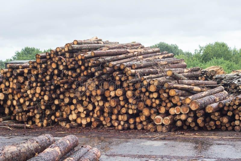 En enorm hög av journaler från skogen, ett sågverk, timmer för exporten, journal arkivfoto