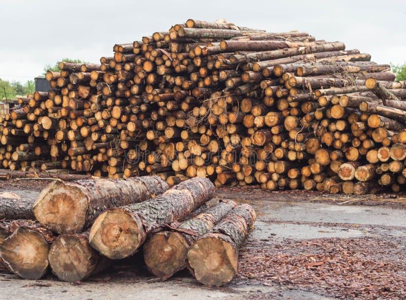 En enorm hög av journaler från skogen, ett sågverk, timmer för exporten, stråle royaltyfri bild