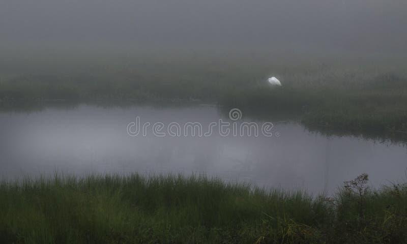 En ensam ägretthäger matar in dimman på den Guste ön Louisiana royaltyfri fotografi