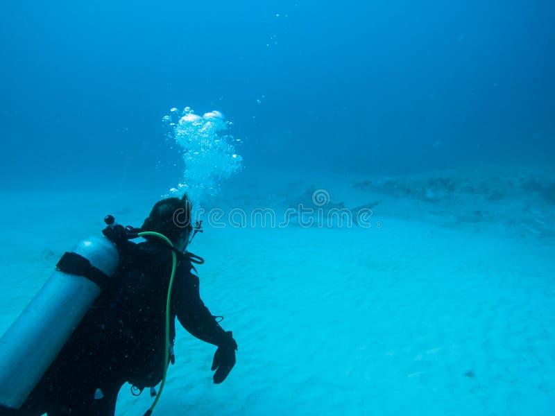 En ensam dykare med en tjurhaj tätt förbi i bakgrunden royaltyfri fotografi