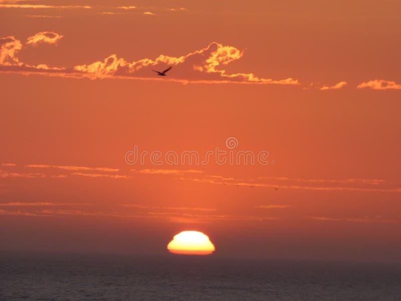 En ensam fågel under solnedgång royaltyfri bild