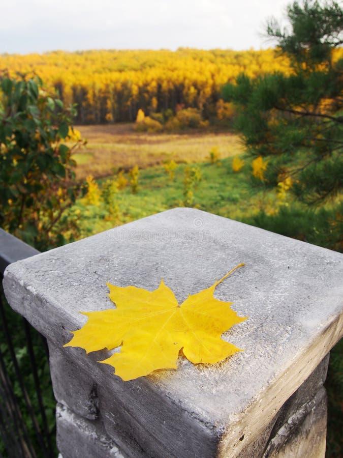 En ensam gul lönnlöv ligger på en konkret pelare mot bakgrunden av det avlägsna höstlandskapet arkivfoton
