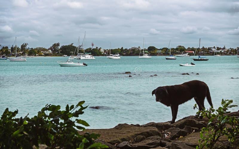 En ensam svart hund på stranden av den storslagna fjärden arkivfoton