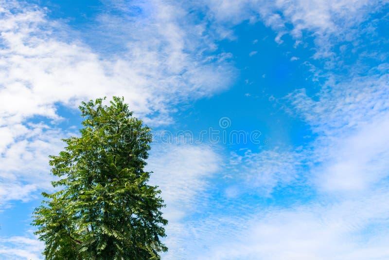 En ensam trädtäckning vid spridd blå himmel för moln arkivbilder
