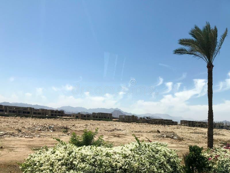 En ensam tropisk palmträd i öknen under den öppna himlen på semester, en tropisk, sydlig varm semesterort under solen i Egypten royaltyfria foton
