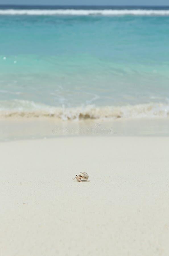 En eremitkrabba p? stranden royaltyfri fotografi