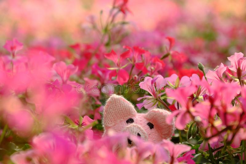 En excitant la scène avec porcin rose fait main cachez dans le jardin d'agrément de géranium photographie stock libre de droits