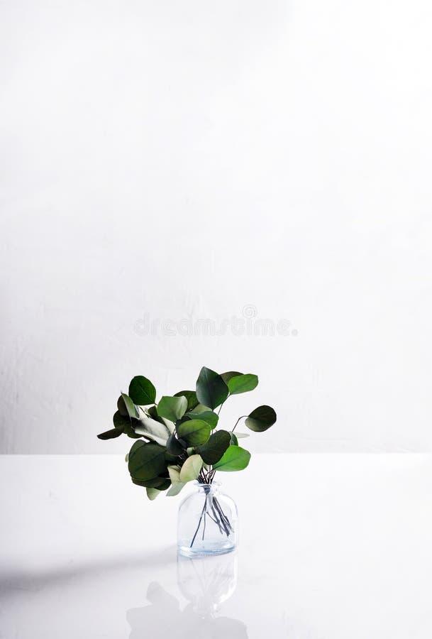 En exponeringsglasvas med en bukett av vintergröna trädställningar på en ljus bakgrund Slapp fokus minimalism arkivbild