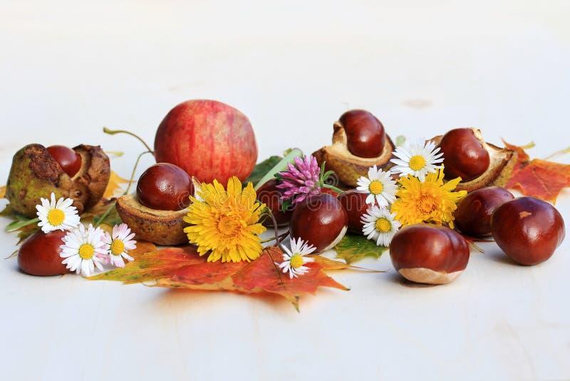 En färgglad höst med blommor, kastanjer och äpplen arkivfoton