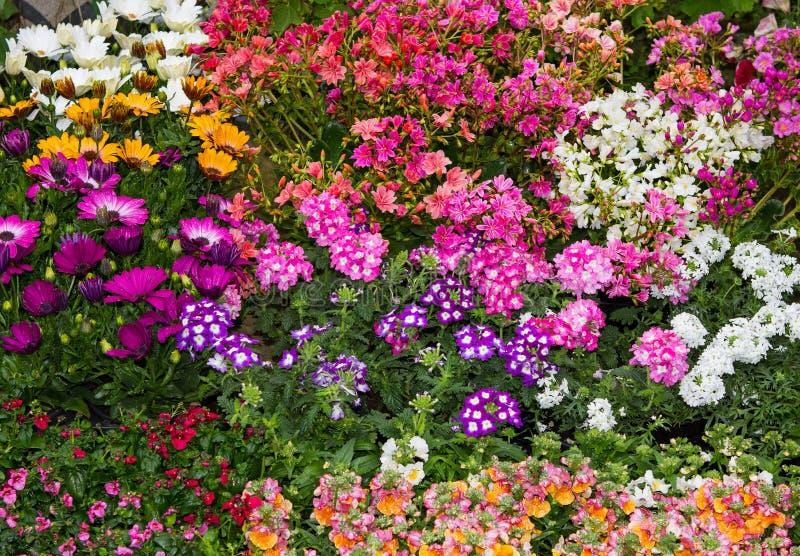 En färgrik blomsterrabatt med vibrerande perenna växter arkivbild