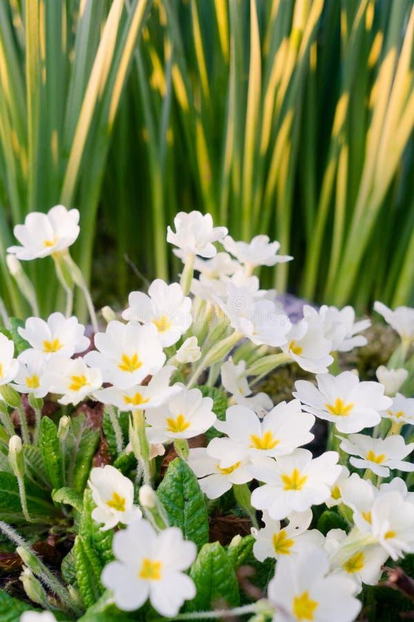 En färgrik blomvårsoluppgång royaltyfria bilder