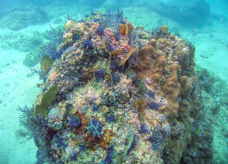 En f?rgrika Coral Reef i den Banderas fj?rden n?ra Puerto Vallarta, Mexico royaltyfri bild