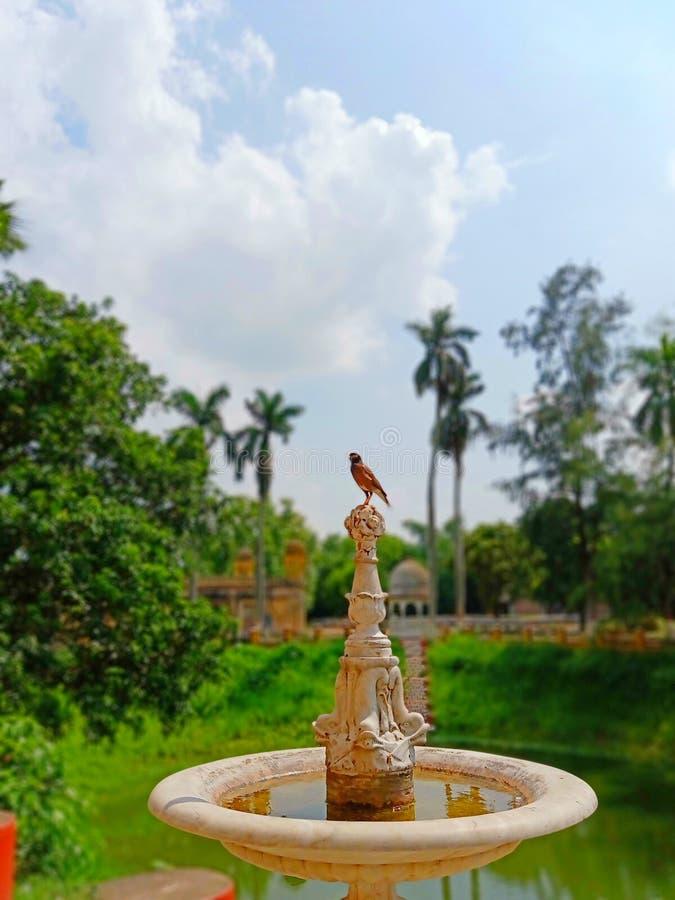 En fågel är på ett härligt stenar skulptur i trädgården, Indien royaltyfria bilder