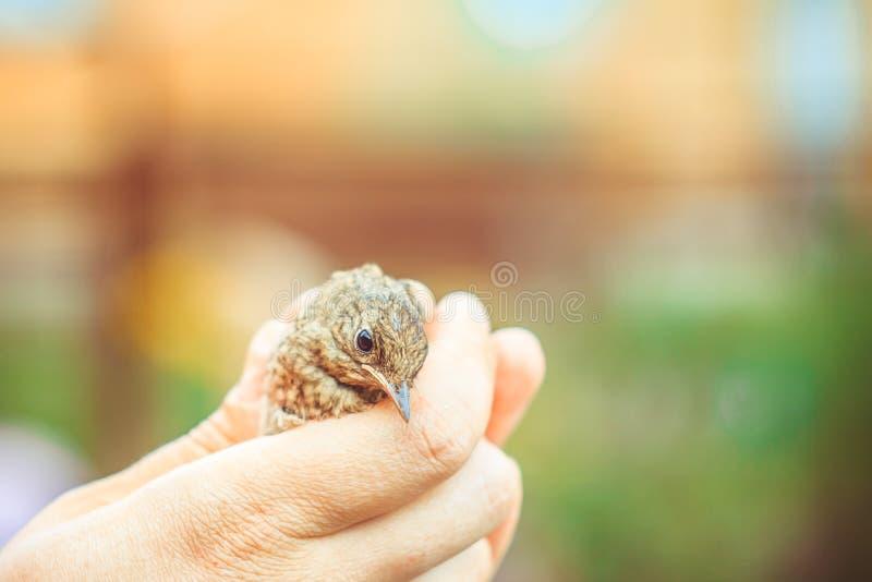 En fågel i hand royaltyfri bild