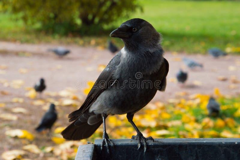 En fågel i Kolomenskoen parkerar arkivbilder