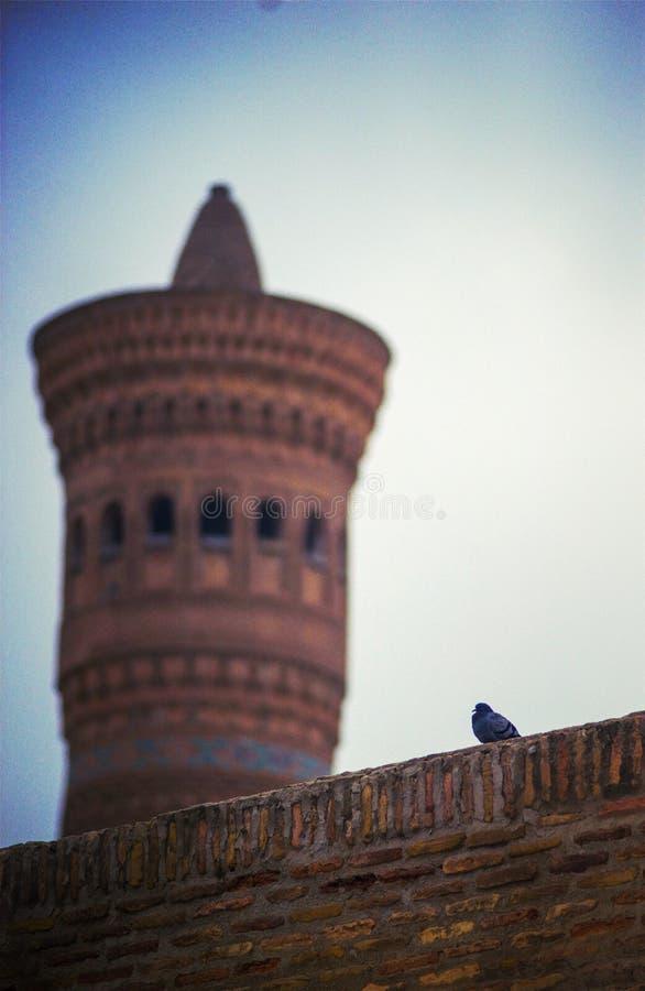 En fågel på en bulding vägg för historisk forntida gammal islam, Bukhara, Uzbekistan arkivfoton