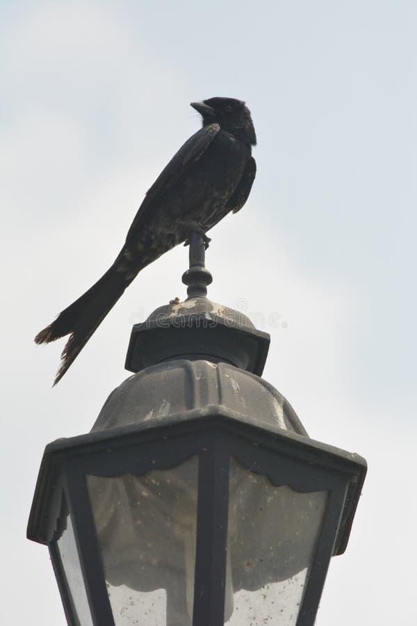 En fågel på en lampa fotografering för bildbyråer