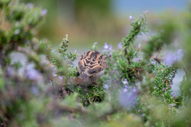 En fågel på ett träd nära sjön Wanaka, Nya Zeeland fotografering för bildbyråer