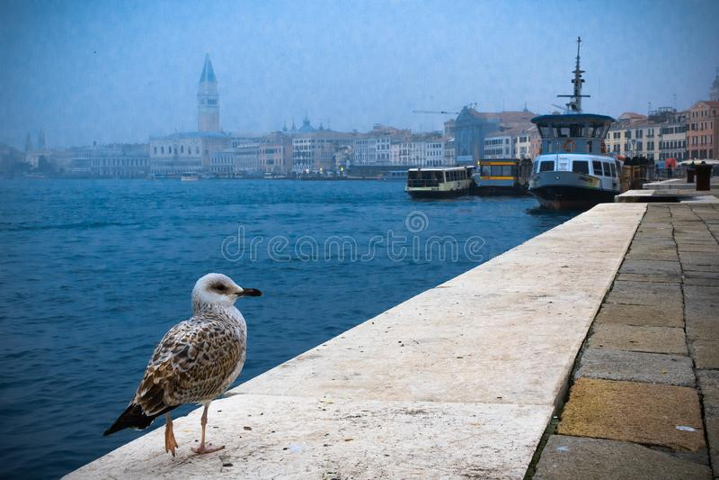 En fågel sitter i kanten av kusten i den venice gatan arkivbild