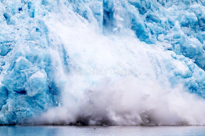 En fågel som bort flyger som glaciären, kalvar i bakgrund royaltyfri foto