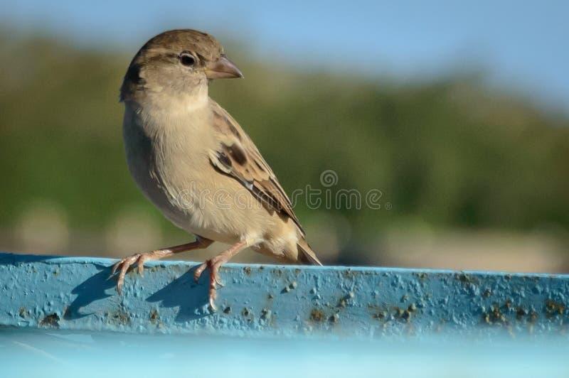 En fågel står upp med stolthet arkivfoto