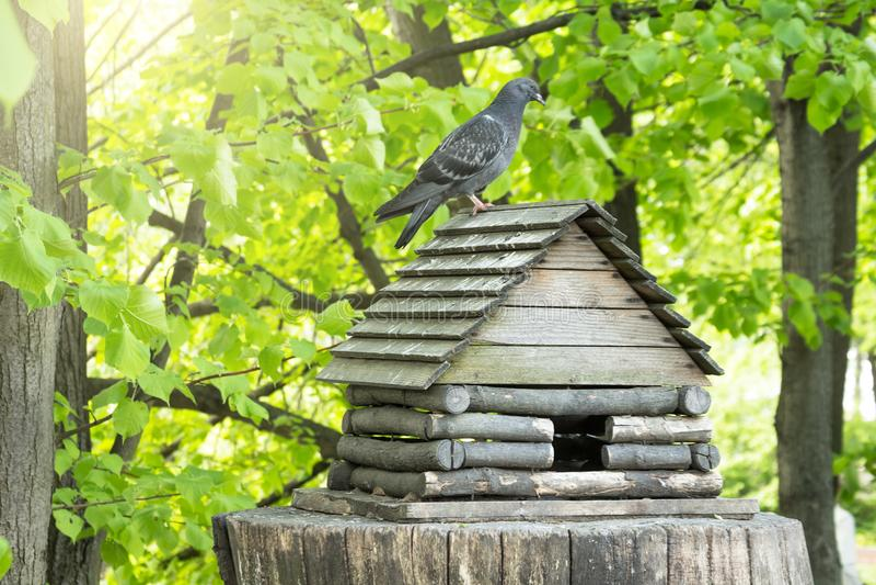 En fågelförlagematare i form av en koja på en hampa i en parkera med en duva på taket royaltyfria bilder