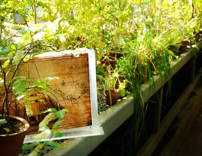 En fönsterfönsterbräda med växter och en bild av ett skepp arkivbilder