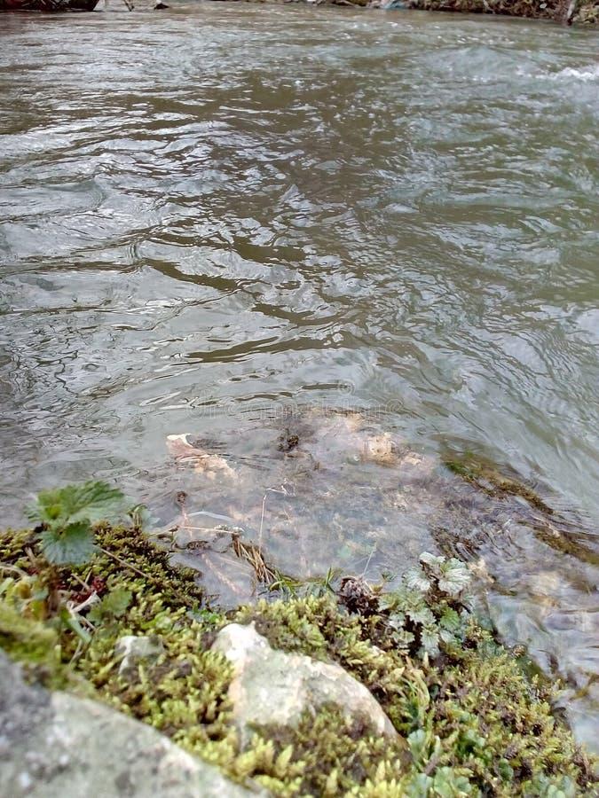 En förälskelse och en flod royaltyfria bilder