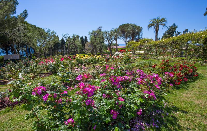 `en För Il Roseto för rosträdgård` i Genoa Genova Nervi, inom Genoa Nervi Parks, Italien royaltyfri fotografi