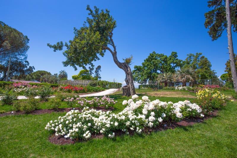 `en För Il Roseto för rosträdgård` i Genoa Nervi, inom Genoa Nervi Parks, Italien arkivfoton